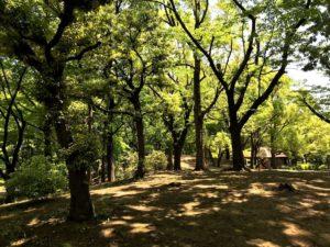 平和島公園キャンプ場区画B